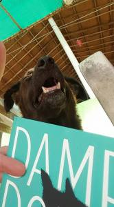 Even Sandy, the stray beach-dog, found something to laugh about in 'Damp Dogs & Rabbit Wee.'